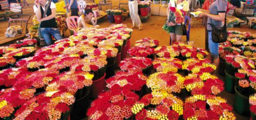 Shopping on yide road guangzhou flower and pet markets in guangzhou junglespirit Images